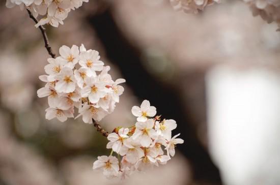 Minimalisme japonais | BN040
